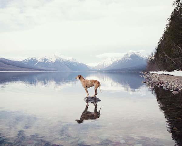 perro-compañero-de-viajes-7