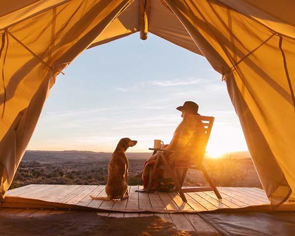 perro-compañero-de-viajes-8