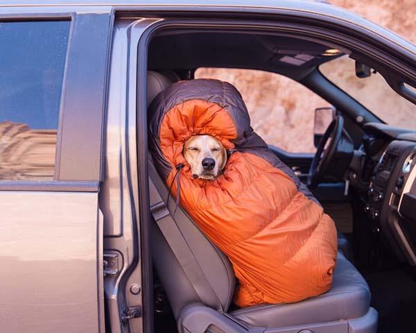 perro-compañero-de-viajes