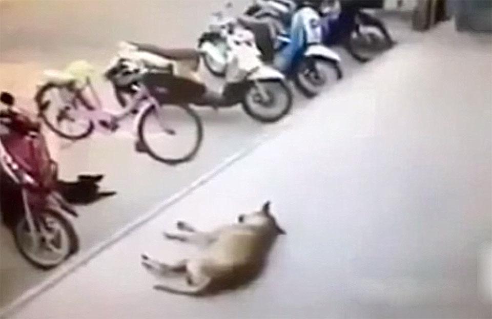 Hombre maltrata a un perro y este se defiende