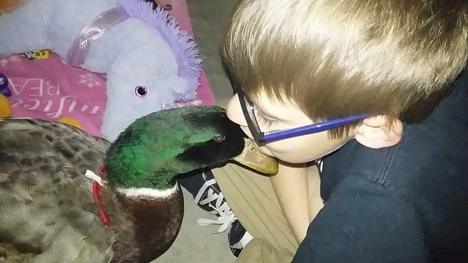 Jonny besa a Nibbles