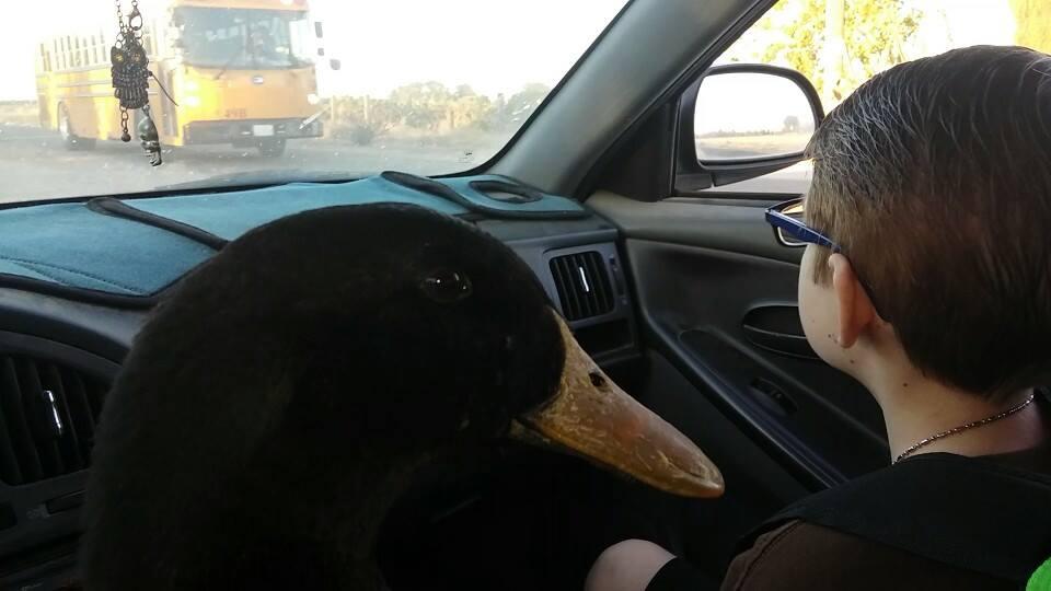 Jonny y Nibbles en el auto