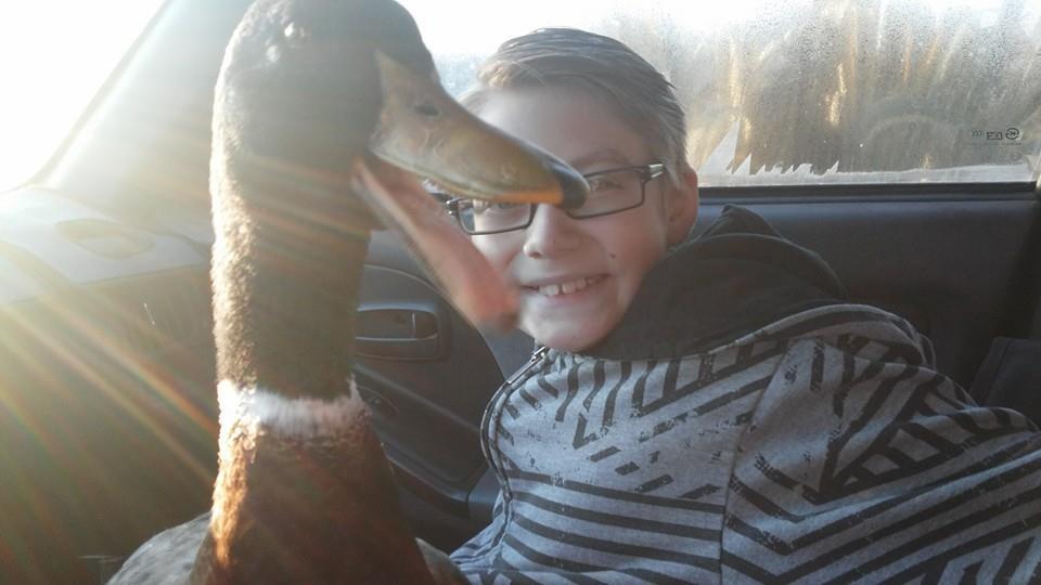 Pato demuestra felicidad cuando el niño llega de la escuela