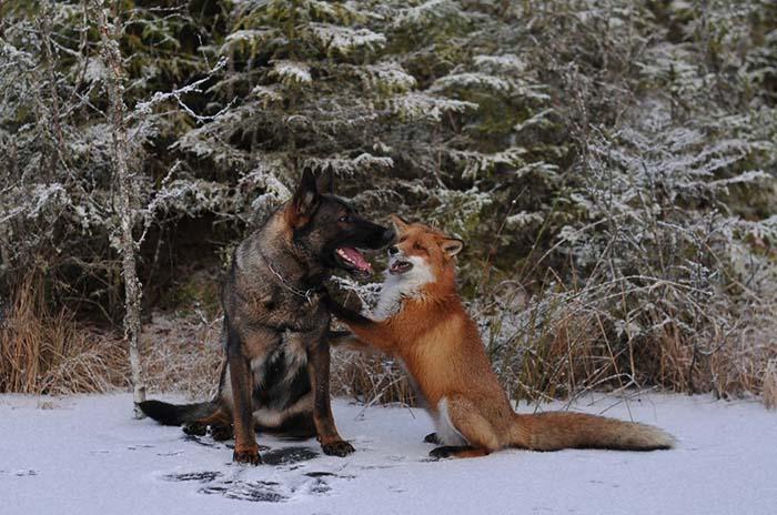 amistad-sin-barreras-2