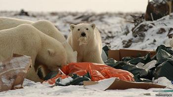 animales-no-distinguen-basura-de-comida