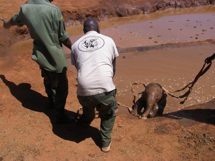 bebé elefante ahogándose