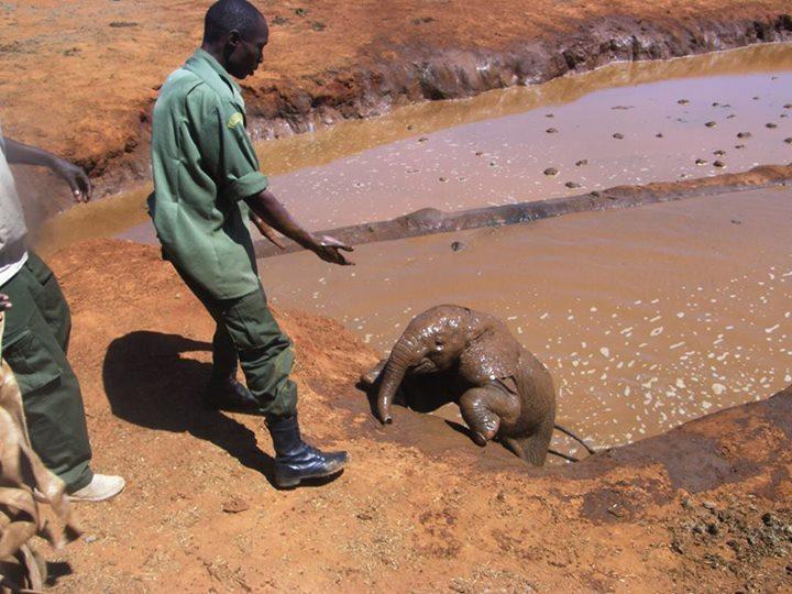 Elefante bebé rescatado