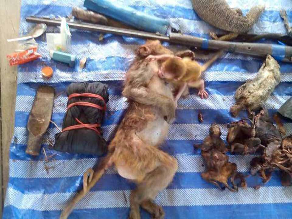 Casa-furtive-monkeys