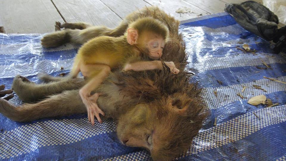 die-madre-scimmia