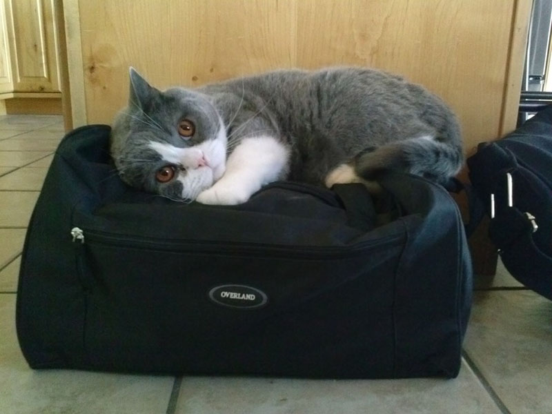 estas-mascotas-también-quieren-ir-de-viaje-10