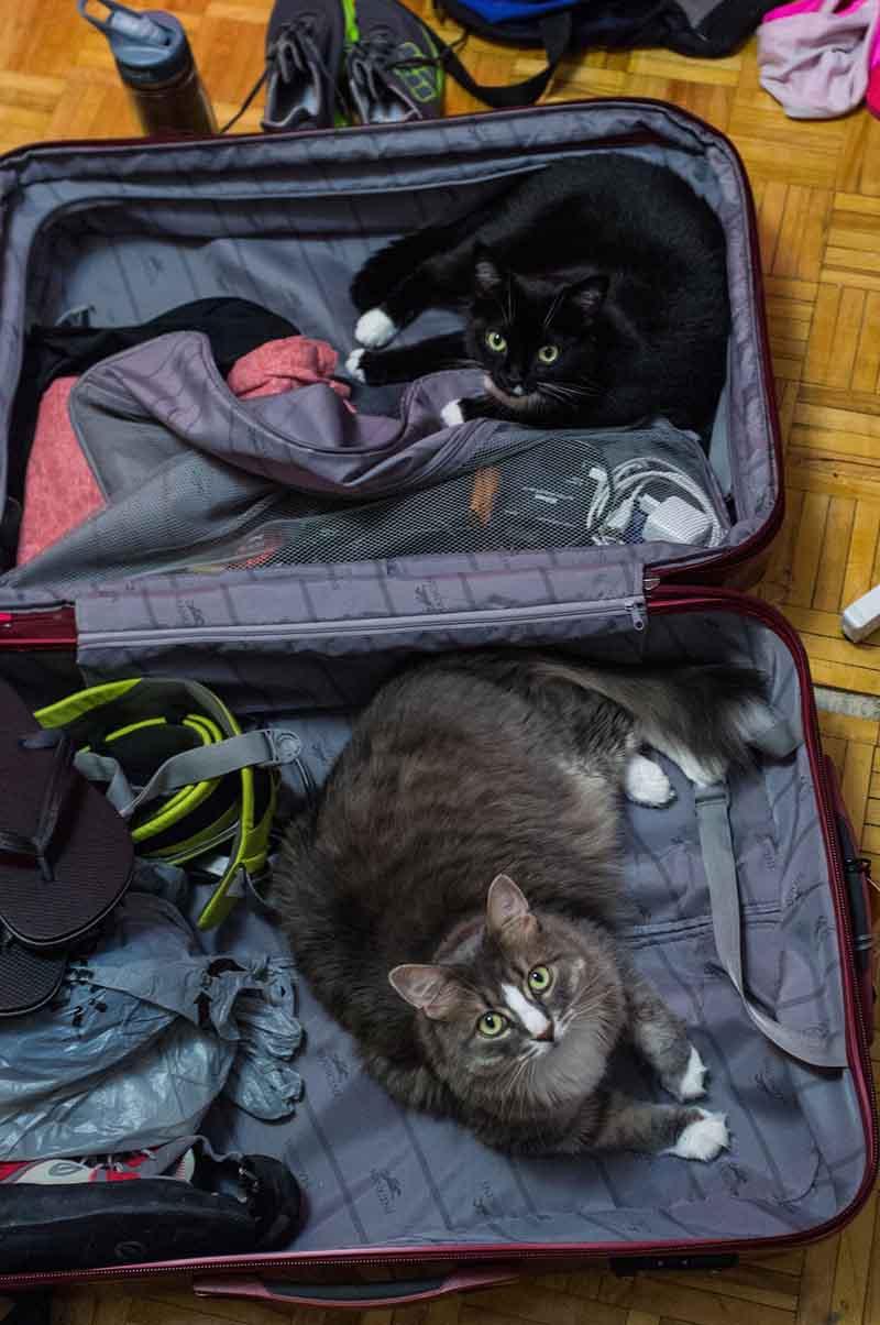 estas-mascotas-también-quieren-ir-de-viaje-12