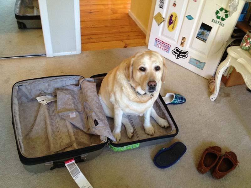 estas-mascotas-también-quieren-ir-de-viaje-13
