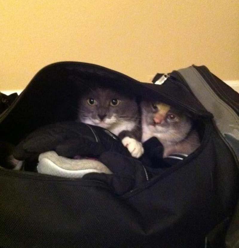 estas-mascotas-también-quieren-ir-de-viaje-14