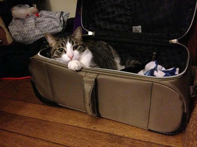 estas-mascotas-también-quieren-ir-de-viaje-16