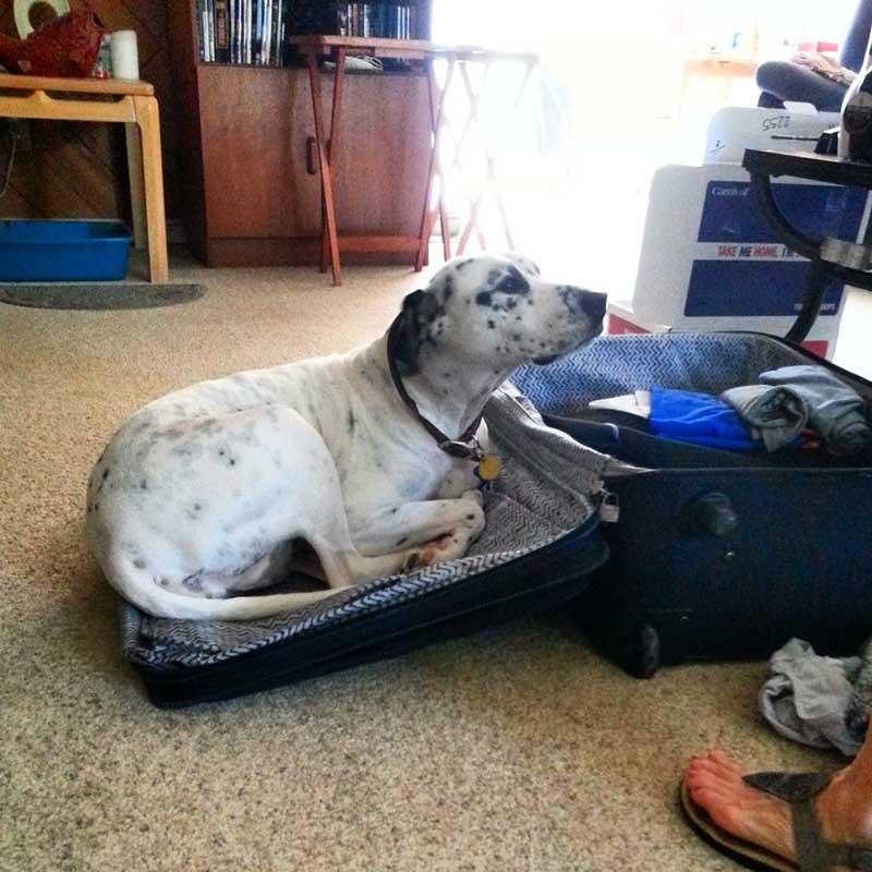 estas-mascotas-también-quieren-ir-de-viaje-17