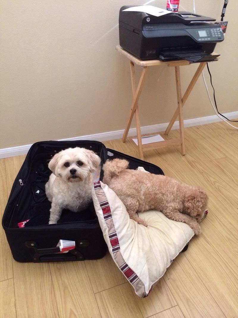 estas-mascotas-también-quieren-ir-de-viaje-2