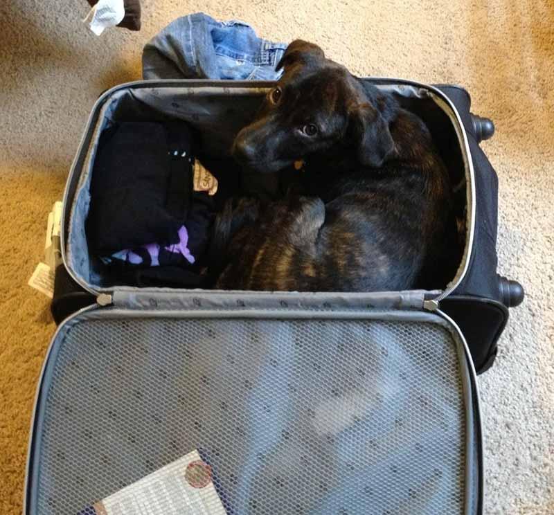 estas-mascotas-también-quieren-ir-de-viaje-3