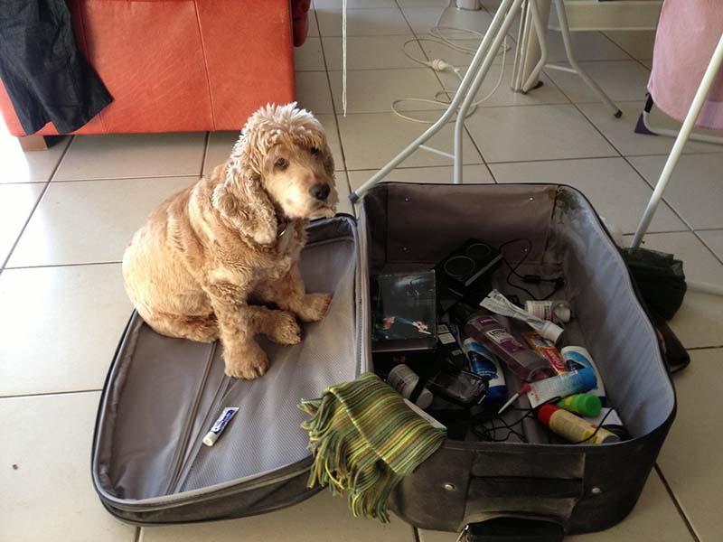 estas-mascotas-también-quieren-ir-de-viaje-4