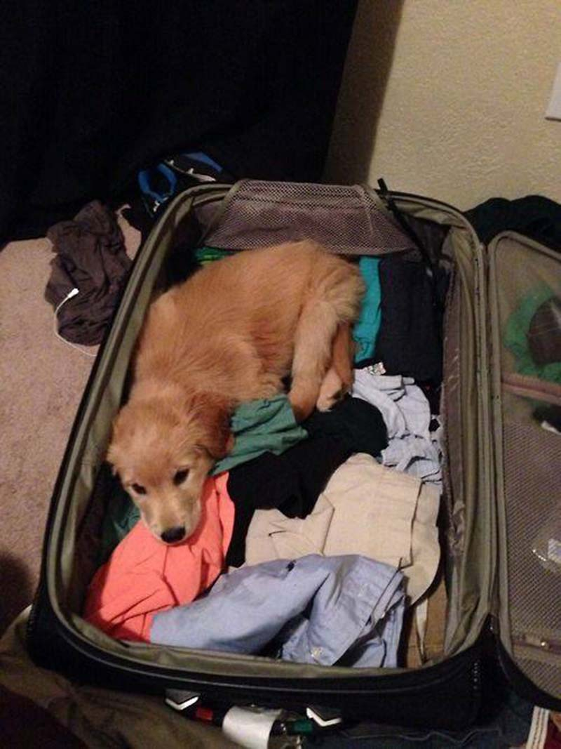 estas-mascotas-también-quieren-ir-de-viaje-5