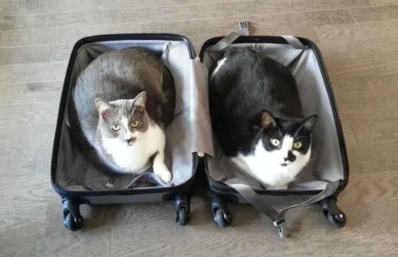 estas-mascotas-también-quieren-ir-de-viaje-6