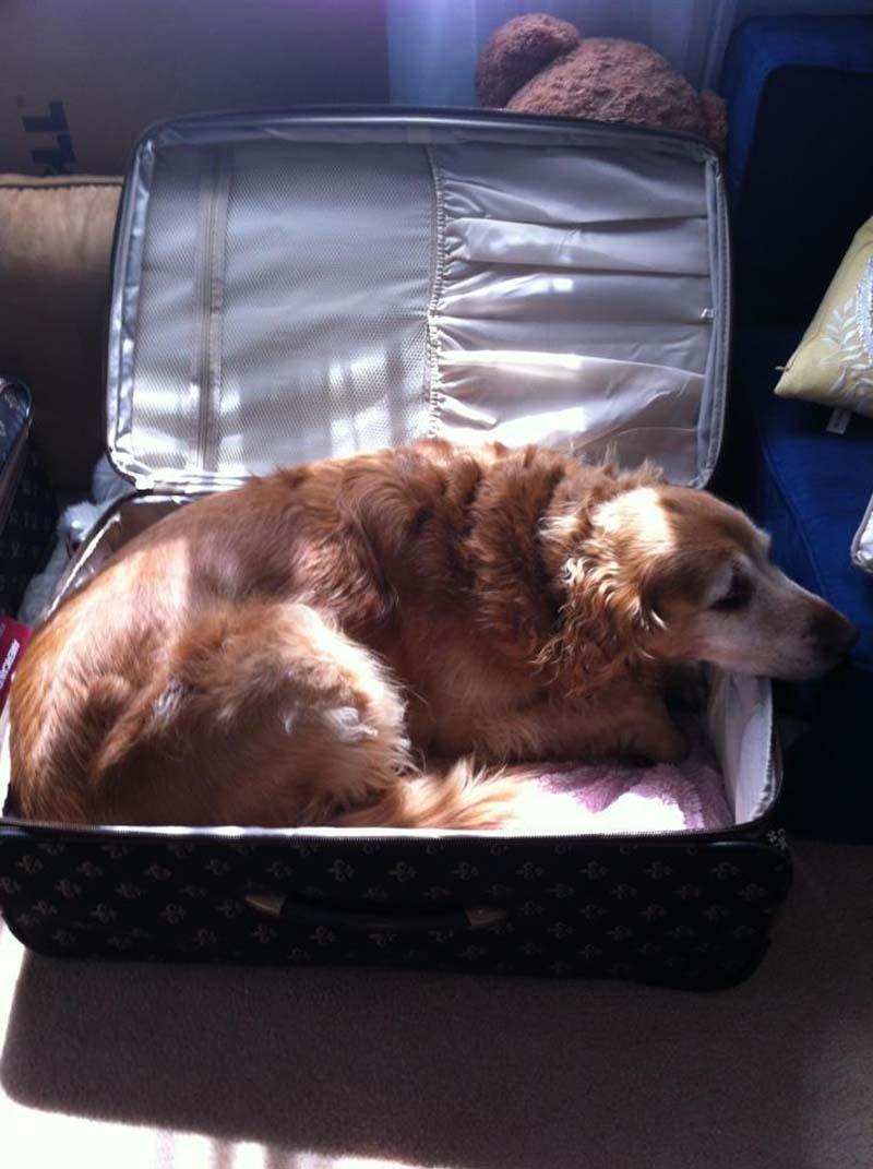 estas-mascotas-también-quieren-ir-de-viaje-7