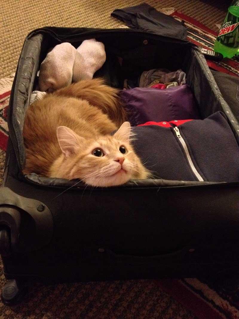 estas-mascotas-también-quieren-ir-de-viaje-8