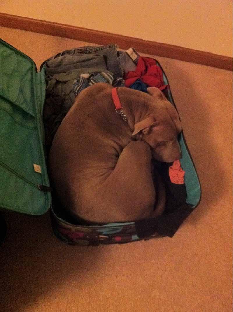 estas-mascotas-también-quieren-ir-de-viaje-9