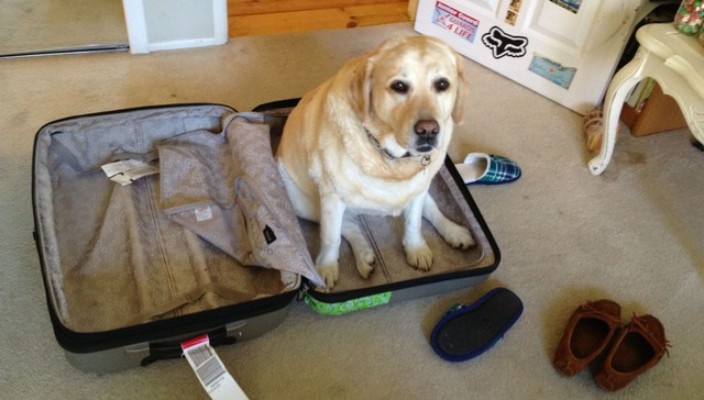 mascotas también quieren ir de viaje