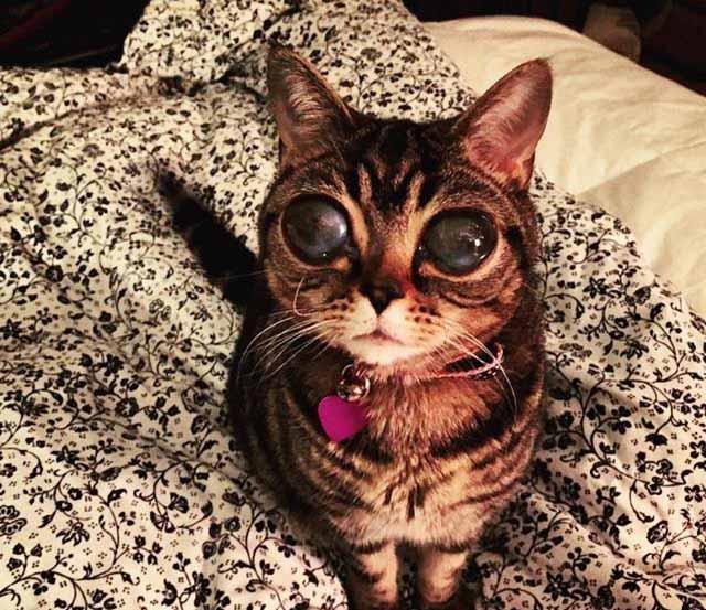 gata-con-ojos-más-grandes