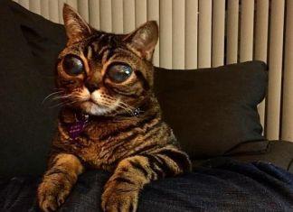 gata con los ojos más grandes