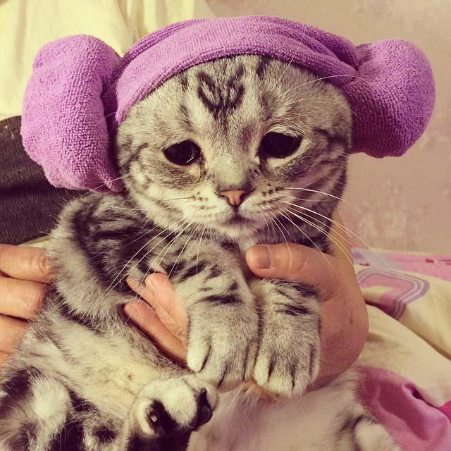gato-con-la-cara-más-triste-10