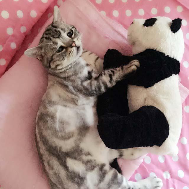 gato-con-la-cara-más-triste-14