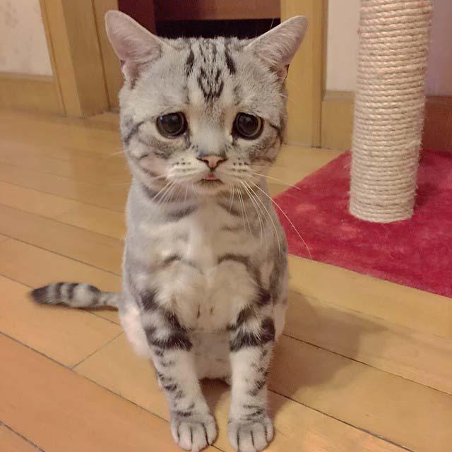 gato-con-la-cara-más-triste-4
