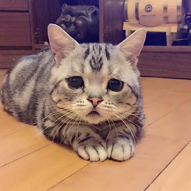 gato-con-la-cara-más-triste-6