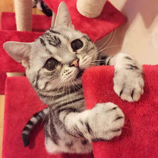 gato-con-la-cara-más-triste-7