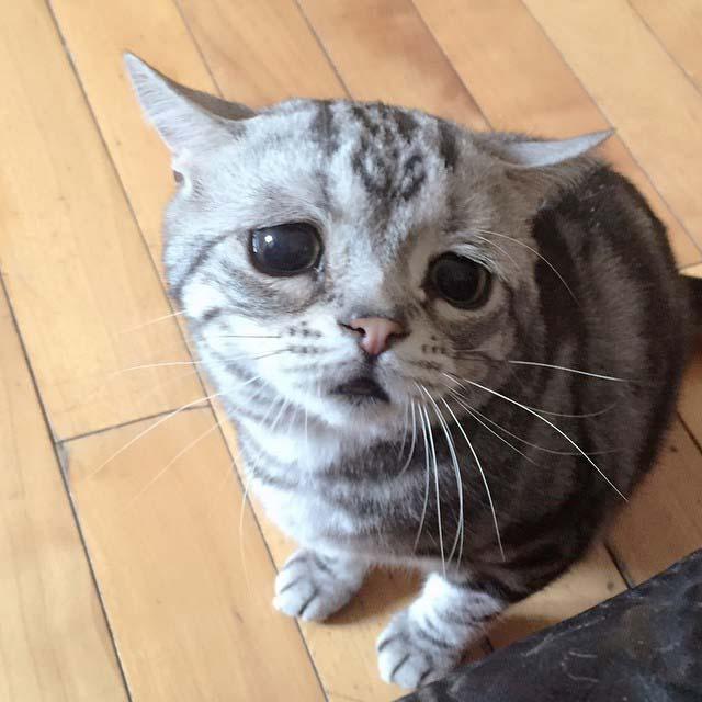 gato-con-la-cara-más-triste-8