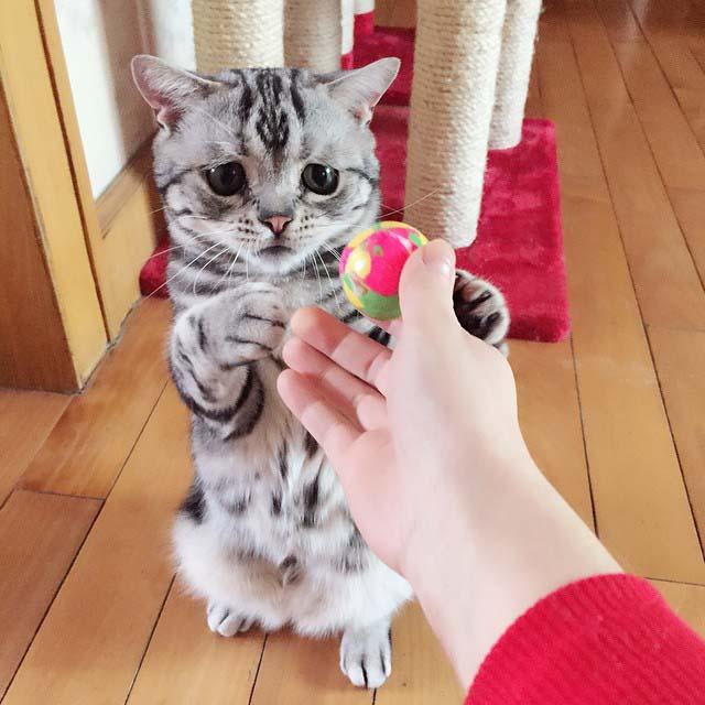 gato-con-la-cara-más-triste-9