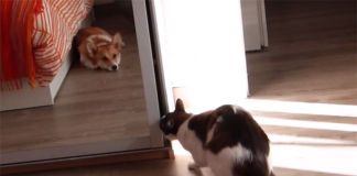gato necesita un momento de privacidad