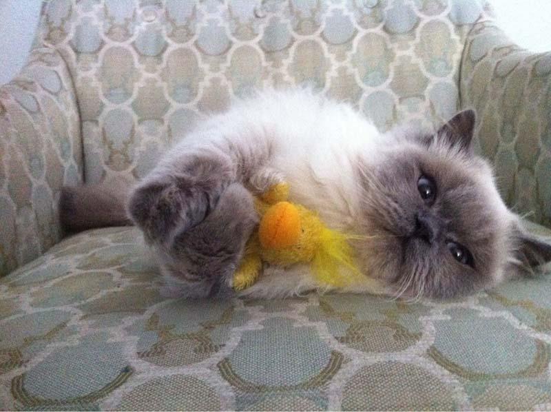 gatos-aman-a-los-patos-8
