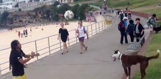 jogo-bonito-entre-un-hombre-y-un-perro