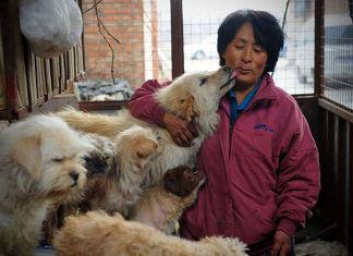 Mujer salva a 100 perros de ser comidos en festival en China
