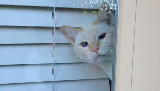 Cuando tus mascotas no esperan que regreses pronto
