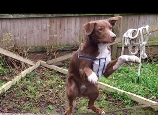 ozzy-perro-equilibrio
