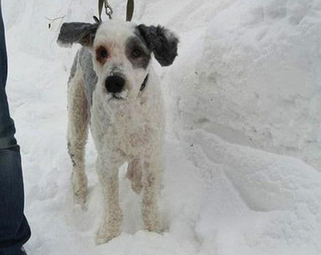 perro-que-cuidaba-una-herencia-fue-rescatado