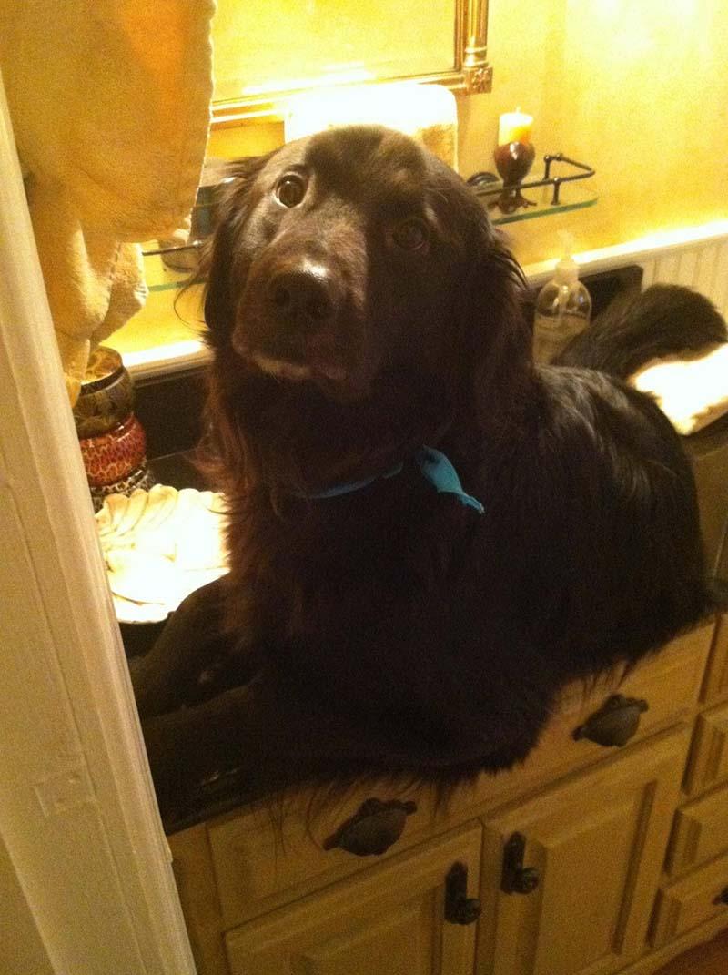 perro-negro-grande