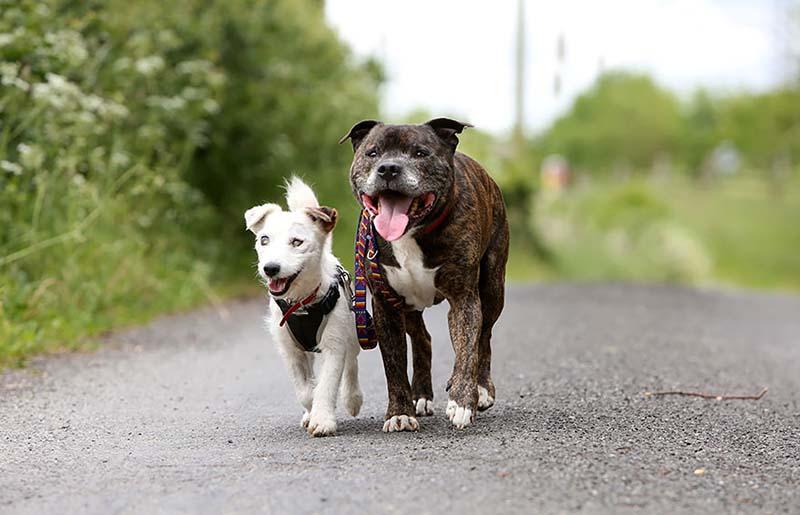 Perro ciego camina junto a su guía