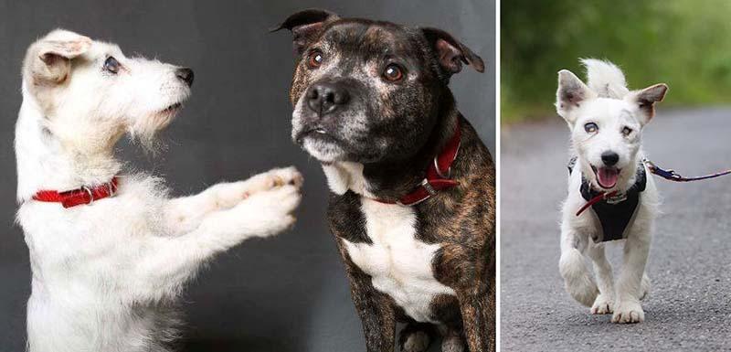 perro guía de un perro ciego