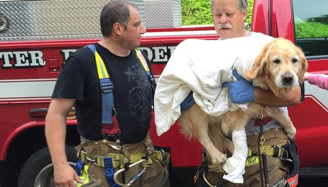 perro se lanza contra autobús para proteger a su humana