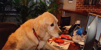 perros en el trabajo