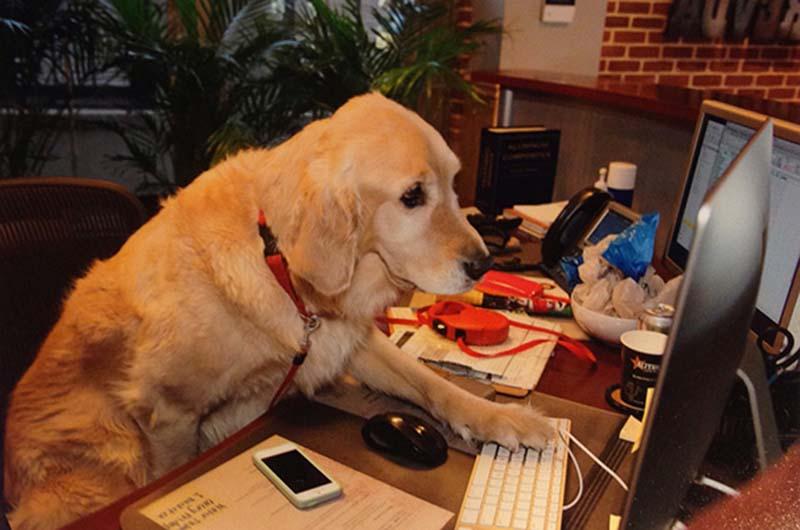 perros-en-el-trabajo-1